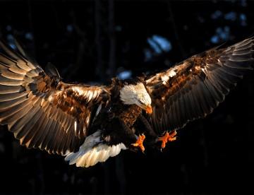 eaglesaintsarisebg